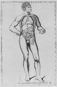explicatio tabularum anatomicum bartholomaei eustachii by bernard siegfried albinus