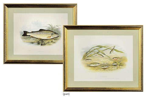 untitled from british fresh water fishes 10 others 11 works by william hougton