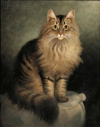 portrait of a maine coon cat by percy a. sanborn