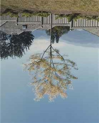 tree on site of former camera obscura by rodney graham