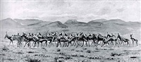 herd of wild game by alfred dugmore