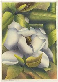 magnolia grandiflora by luigi rist