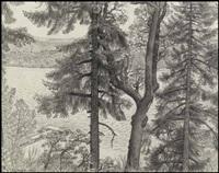 fir and arbutus trees, ladysmith, bc by edward john hughes