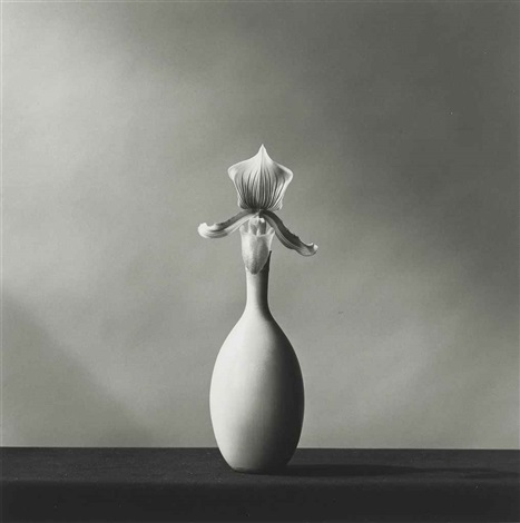 single orchid by robert mapplethorpe