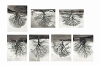 welsh oak #1-7 (in 7 parts) by rodney graham