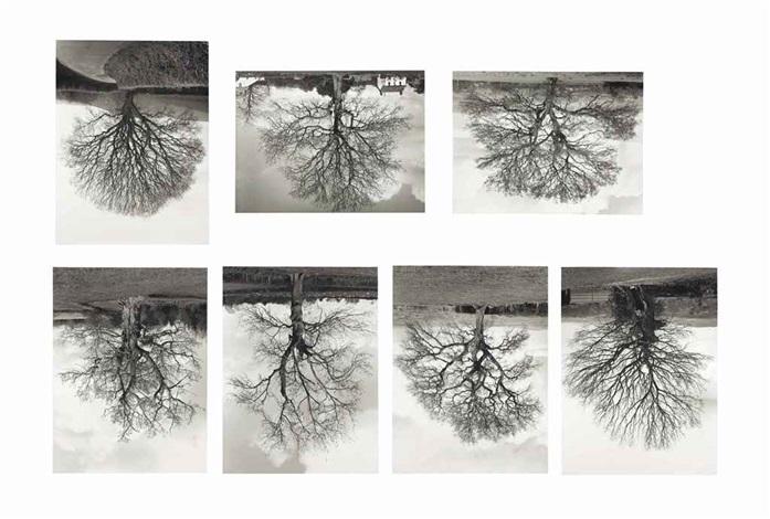 welsh oak #1-7 (in 7 parts) by rodney graham