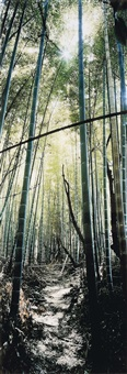 bamboo forest, nara, japon by wim wenders