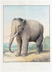 zoological subjects (album w/81 works, incl. 6 pencil) by charles hamilton smith