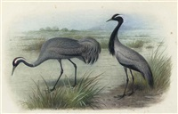 two cranes (study) (+ 2 others; 3 works) by holger karl gronvold