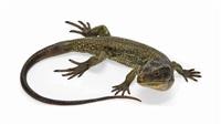 lizard by nam greb