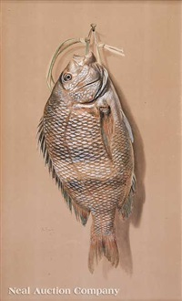 nature morte: sheepshead fish by achille perelli