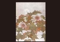 cotton rosemallow by hiroshi iwasaki