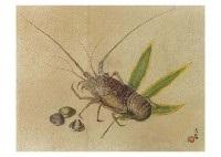 ise shrimp by daijo aoki