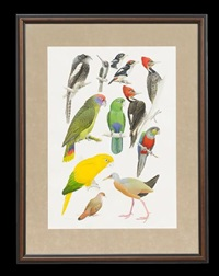 various bird studies by john p. o'neill