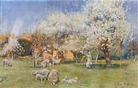 sheep grazing in an orchard by herbert alexander