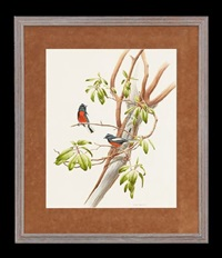 two bluebirds on a branch by john p. o'neill