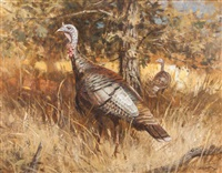 timberlake turkeys by robert kennedy abbett