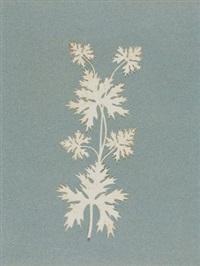 ahornblätter by philipp otto runge