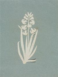 hyazinthe by philipp otto runge