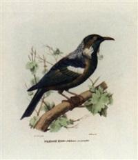 atlante zoologico popolare, opera compilata sui più recenti lavori di zoologia italiani e stranieri - ornothological studies by giovanni boschi