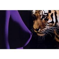 tiger sensual on by jonathan bermudes