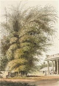 bamboo grove by john gantz