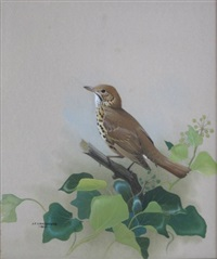 bird on branch by james fenwick lansdowne