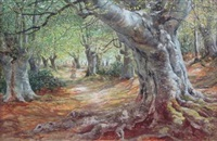 path through the beech wood by james docharty
