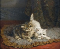 zwei neugierige kätzchen by daniel merlin