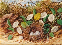 bird's nest (with white eggs) and flowers by william m. cruikshank