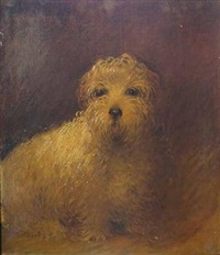 portrait of white terrier by harry finney