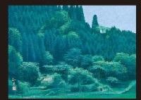 green shadow by tomokatsu yamamoto
