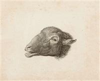 ziegen, kuh mit kalb und blökender schafkopf (8 works on 5 sheets) by johann christian reinhart
