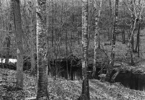 woods and stream connecticut by paul caponigro