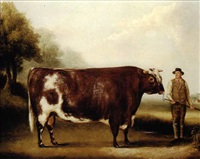 a dark roan bull by william henry davis