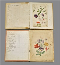 sketchbooks (2 works) by johann conrad gessner