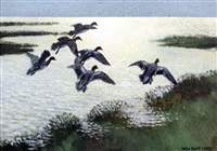 widgeon moved by the tide as it creeps over the saltings by peter scott