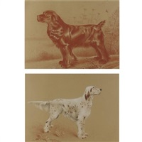 a spaniel and a setter (pair) by blendon reed campbell