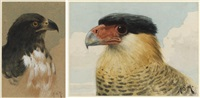 a peregrine falcon (+ an imperial eagle; 2 works) by henry stacy marks