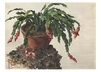 christmas cactus by tama ragusa