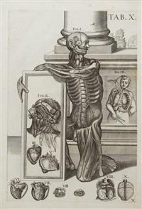 tabulae anatomicae (bk w/frontispiece & 27 works) by pietro da cortona