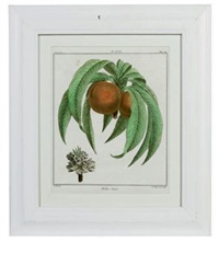 fruit species (set of 12) by henri louis duhamel du monceau