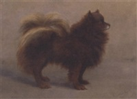a pomeranian by mary georgina barton