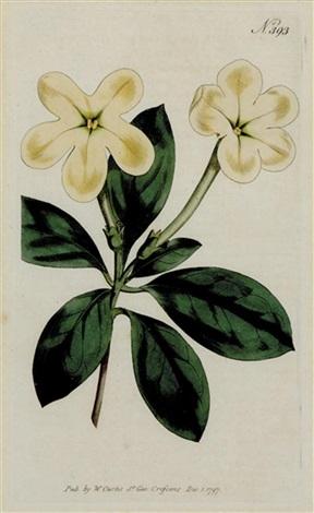 botanicals (set of 12 works) by william curtis