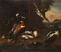 bodegón de aves by robert griffier