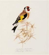 oiseaux sur leurs branches (4 works) by attila heszlenyi