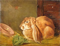 lop-eared rabbit in a stable by arthur batt