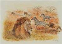 lion et zèbres by pierre cousy