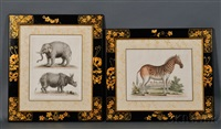 zebras (2 works), rhinoceros and elephant (single sheet), cagvi monkey, squirrel and turtle (6 works) by george edwards