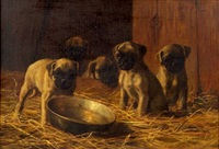 five pug puppies by franklin whiting rogers